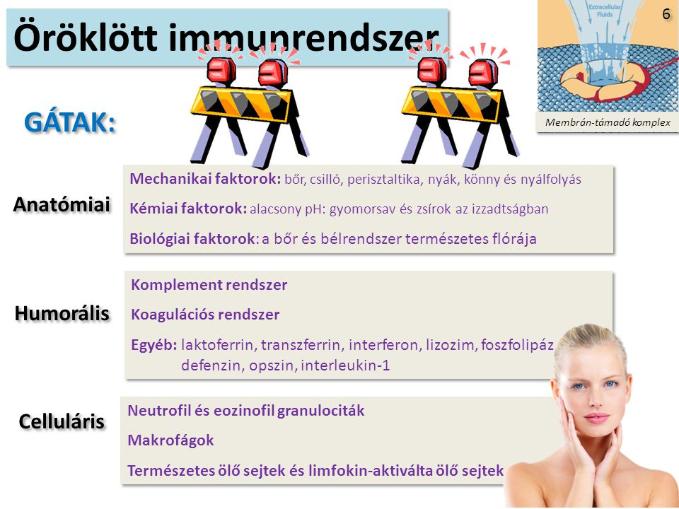 HUMORÁLIS IMMUNVÁLASZ A humorális immunválasz fázisai Y Y