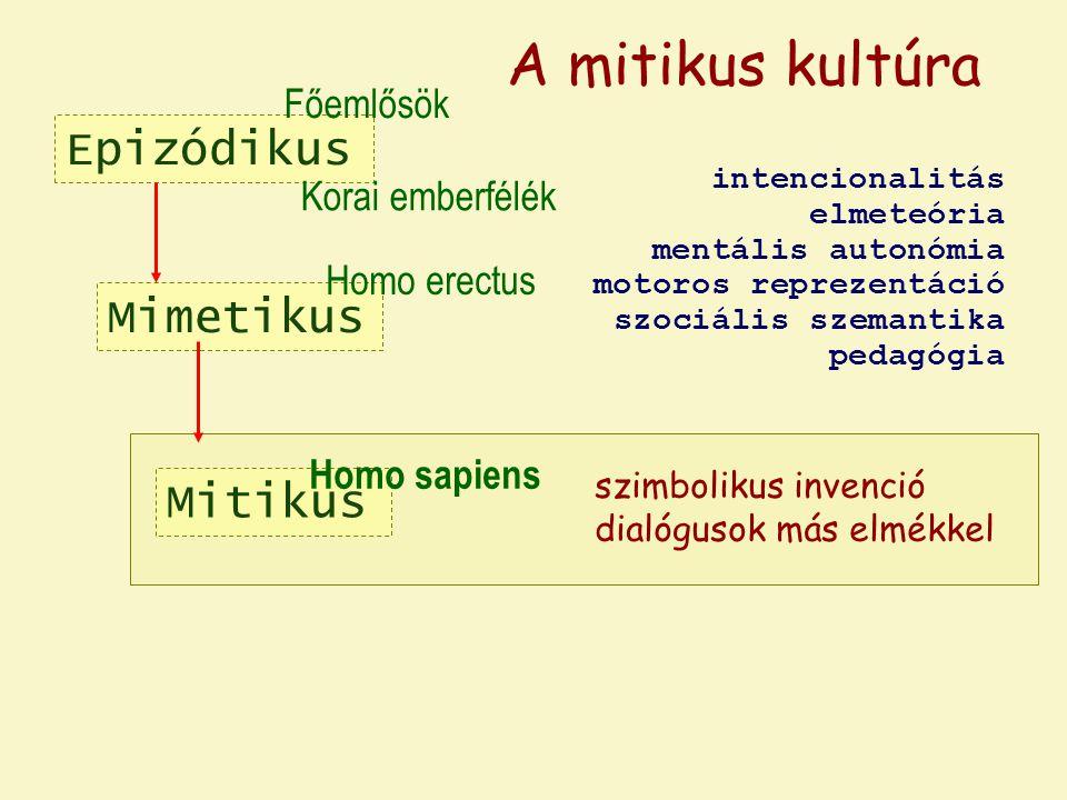 Epizódikus Mimetikus Homo erectus Főemlősök Korai emberfélék A mitikus kultúra Mitikus Homo sapiens szimbolikus invenció dialógusok más elmékkel intencionalitás elmeteória mentális autonómia motoros reprezentáció szociális szemantika pedagógia