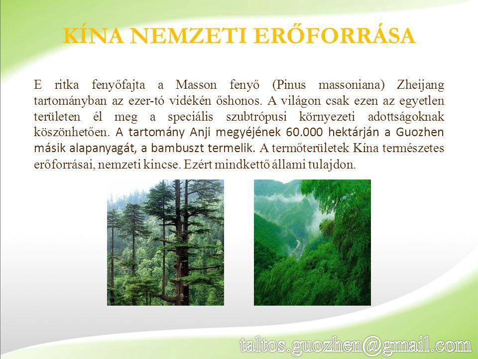 KÍNA NEMZETI ERŐFORRÁSA E ritka fenyőfajta a Masson fenyő (Pinus massoniana) Zheijang tartományban az ezer-tó vidékén őshonos. A világon csak ezen az