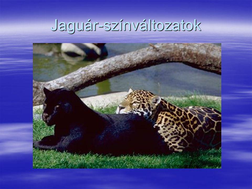 Jaguár-színváltozatok