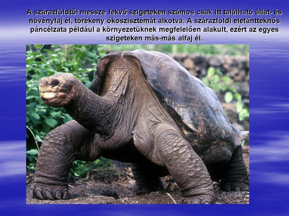 A szárazföldtől messze fekvő szigeteken számos csak itt található állat- és növényfaj él, törékeny ökoszisztémát alkotva. A szárazföldi elefántteknős