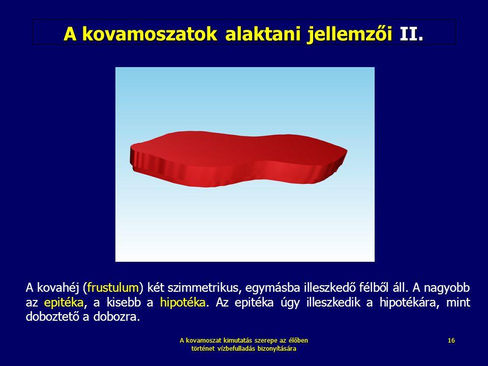 A kovamoszat kimutatás szerepe az élőben történet vízbefulladás bizonyítására 16 A kovamoszatok alaktani jellemzői II. A kovahéj (frustulum) két szimm