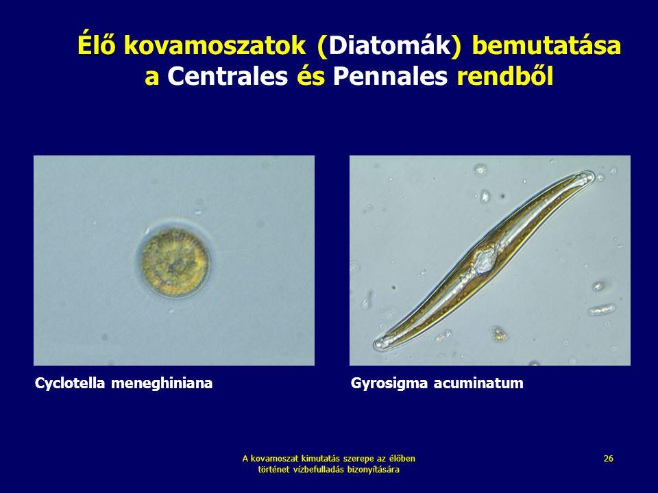 A kovamoszat kimutatás szerepe az élőben történet vízbefulladás bizonyítására 26 Gyrosigma acuminatum Cyclotella meneghiniana Élő Élő kovamoszatok (Di