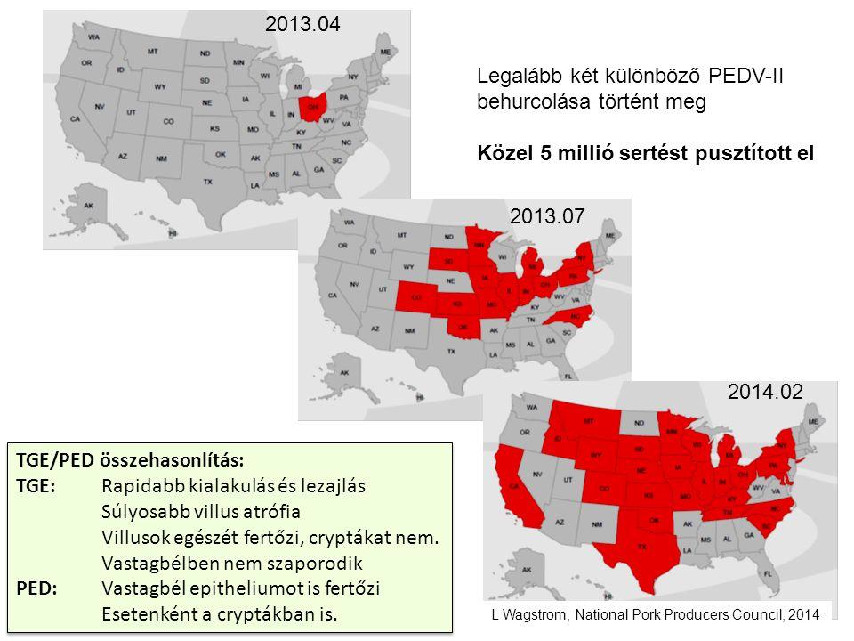 2013.04 2013.07 2014.02 TGE/PED összehasonlítás: TGE:Rapidabb kialakulás és lezajlás Súlyosabb villus atrófia Villusok egészét fertőzi, cryptákat nem.