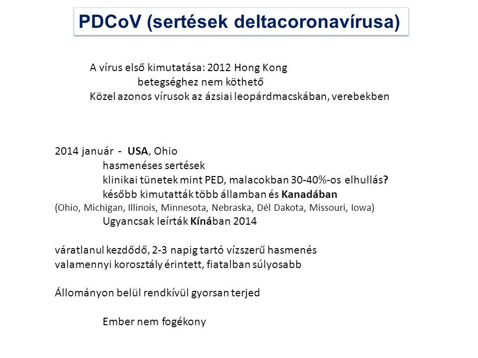 PDCoV (sertések deltacoronavírusa) A vírus első kimutatása: 2012 Hong Kong betegséghez nem köthető Közel azonos vírusok az ázsiai leopárdmacskában, ve