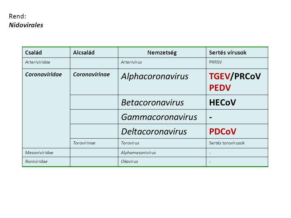 Rend: Nidovirales CsaládAlcsaládNemzetségSertés vírusok ArteriviridaeArterivirusPRRSV CoronaviridaeCoronavirinae AlphacoronavirusTGEV/PRCoV PEDV Betac