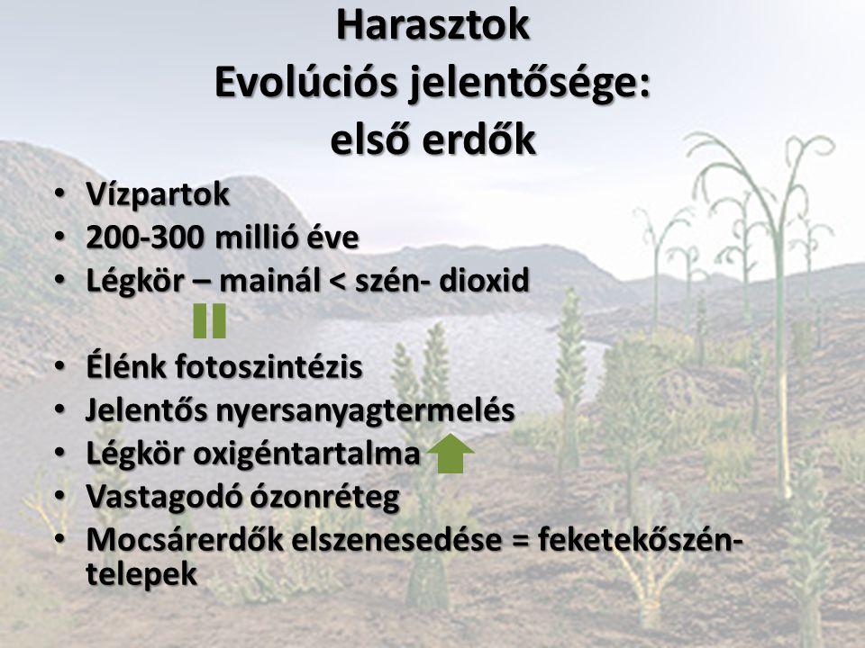 Harasztok Evolúciós jelentősége: első erdők Vízpartok Vízpartok 200-300 millió éve 200-300 millió éve Légkör – mainál < szén- dioxid Légkör – mainál <