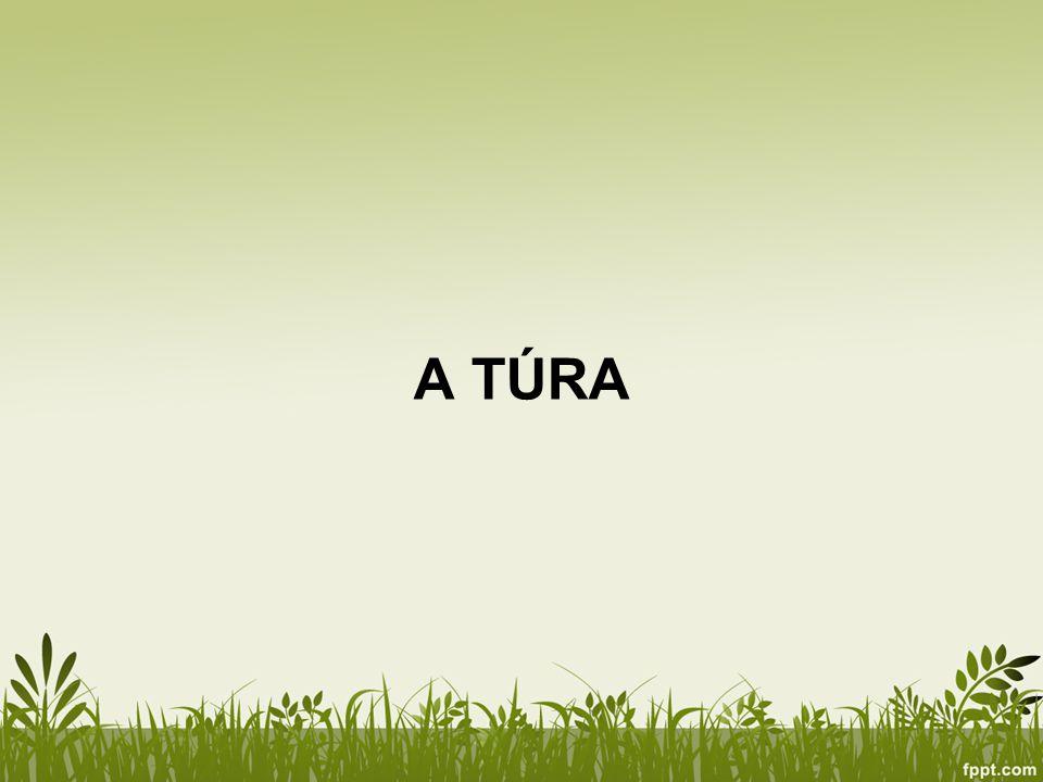 A TÚRA