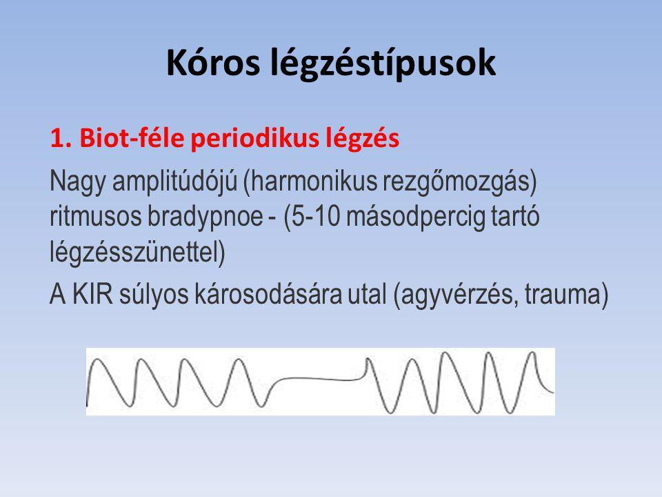 Kóros légzéstípusok 1. Biot-féle periodikus légzés Nagy amplitúdójú (harmonikus rezgőmozgás) ritmusos bradypnoe - (5-10 másodpercig tartó légzésszünet