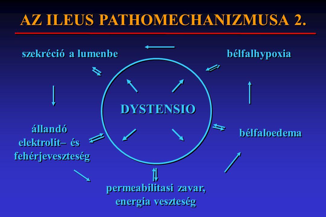 DYSTENSIO permeabilitasi zavar, energia veszteség permeabilitasi zavar, energia veszteség bélfaloedema bélfalhypoxia szekréció a lumenbe állandó elekt
