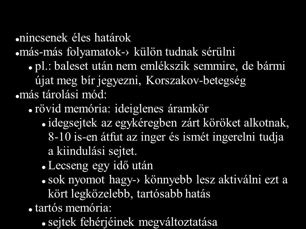 nincsenek éles határok más-más folyamatok-› külön tudnak sérülni pl.: baleset után nem emlékszik semmire, de bármi újat meg bír jegyezni, Korszakov-betegség más tárolási mód: rövid memória: ideiglenes áramkör idegsejtek az egykéregben zárt köröket alkotnak, 8-10 is-en átfut az inger és ismét ingerelni tudja a kiindulási sejtet.