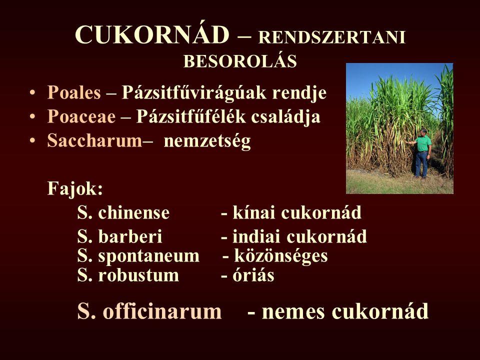 CUKORNÁD – RENDSZERTANI BESOROLÁS Poales – Pázsitfűvirágúak rendje Poaceae – Pázsitfűfélék családja Saccharum– nemzetség Fajok: S. chinense - kínai cu