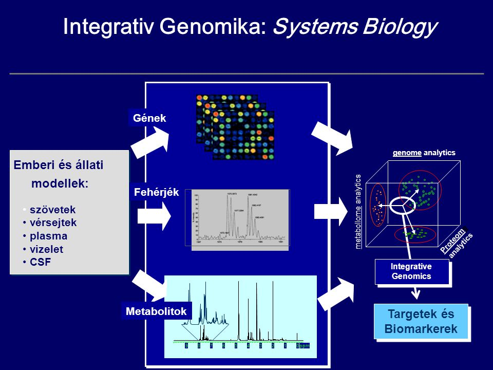 ppm012345678 9 Integrativ Genomika: Systems Biology Targetek és Biomarkerek Targetek és Biomarkerek Integrative Genomics Integrative Genomics Emberi é