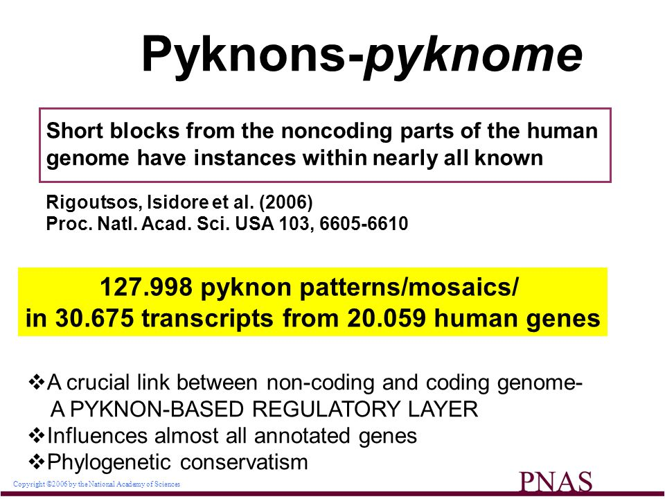 Copyright ©2006 by the National Academy of Sciences Pyknons-pyknome Short blocks from the noncoding parts of the human genome have instances within nearly all known Rigoutsos, Isidore et al.