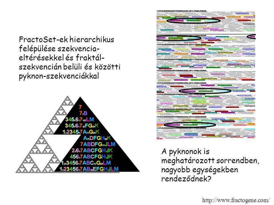 FractoSet-ek hierarchikus felépülése szekvencia- eltérésekkel és fraktál- szekvencián belüli és közötti pyknon-szekvenciákkal A pyknonok is meghatározott sorrendben, nagyobb egységekben rendeződnek.