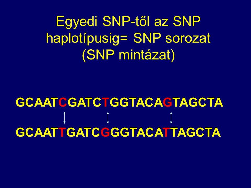 GCAATCGATCTGGTACAGTAGCTA GCAATTGATCGGGTACATTAGCTA Egyedi SNP-től az SNP haplotípusig= SNP sorozat (SNP mintázat)