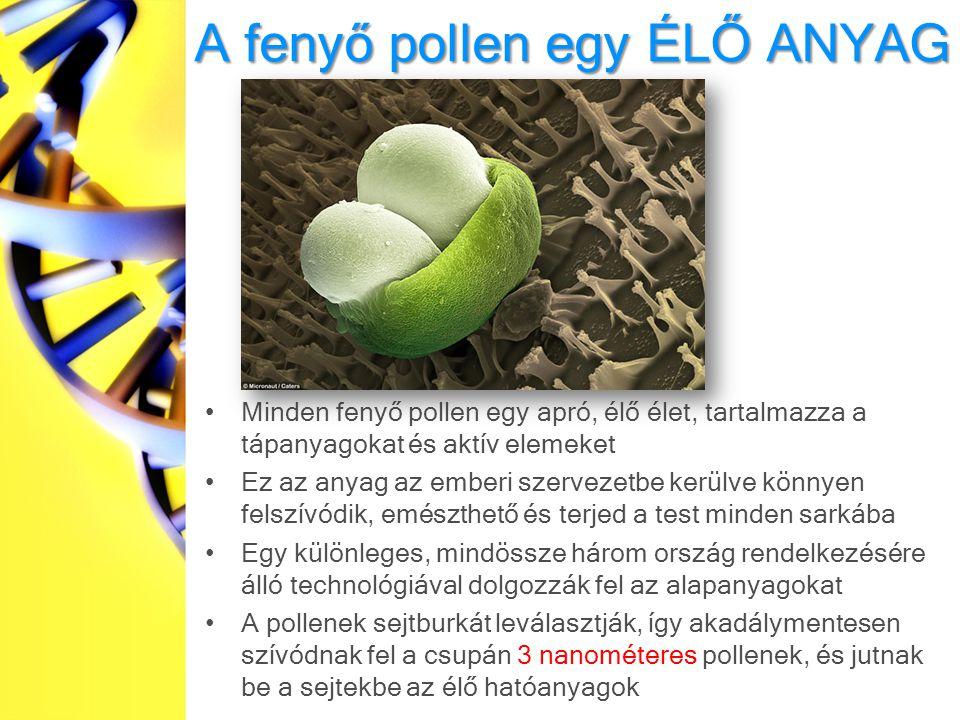A fenyő pollen egy ÉLŐ ANYAG Minden fenyő pollen egy apró, élő élet, tartalmazza a tápanyagokat és aktív elemeket Ez az anyag az emberi szervezetbe kerülve könnyen felszívódik, emészthető és terjed a test minden sarkába Egy különleges, mindössze három ország rendelkezésére álló technológiával dolgozzák fel az alapanyagokat A pollenek sejtburkát leválasztják, így akadálymentesen szívódnak fel a csupán 3 nanométeres pollenek, és jutnak be a sejtekbe az élő hatóanyagok