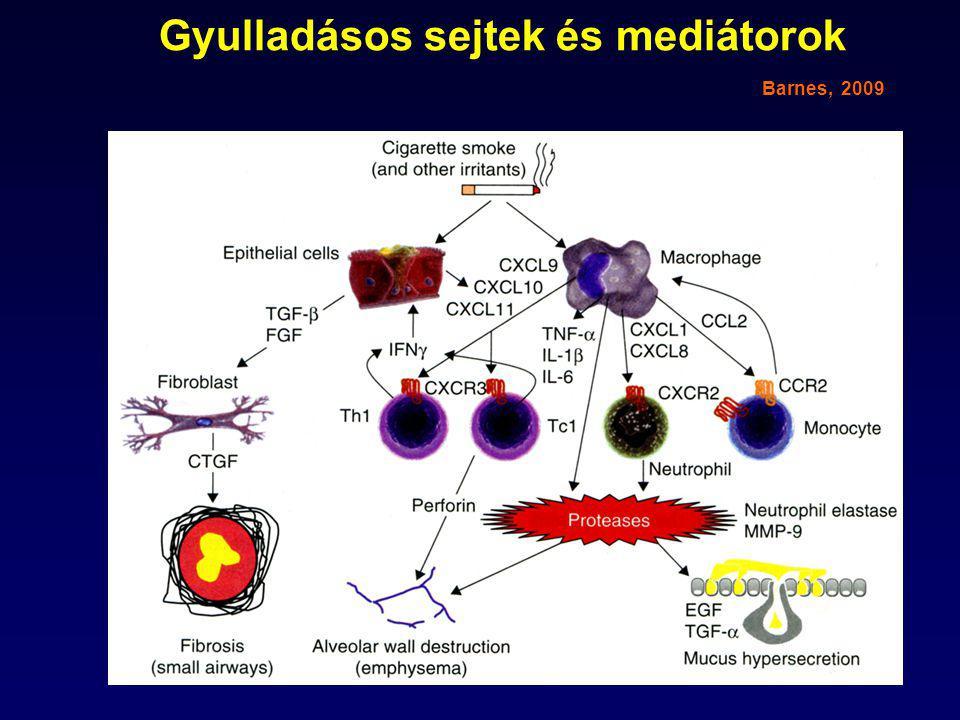 Gyulladásos sejtek és mediátorok Barnes, 2009