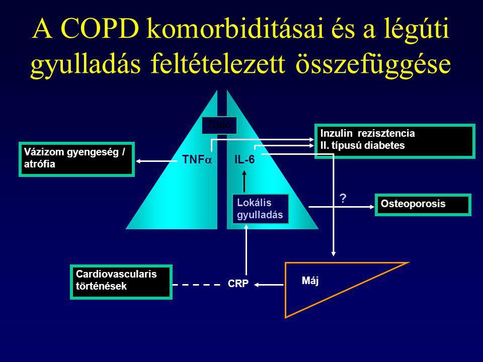 A COPD komorbiditásai és a légúti gyulladás feltételezett összefüggése Vázizom gyengeség / atrófia Inzulin rezisztencia II. típusú diabetes Osteoporos