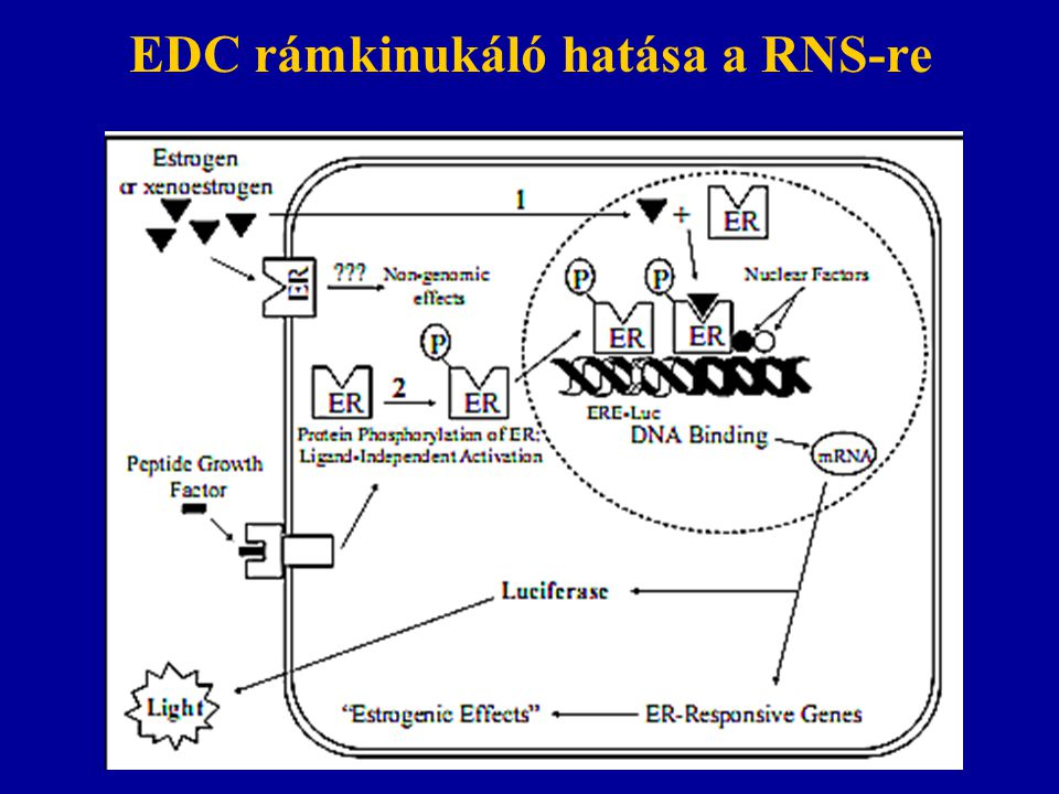 EDC rámkinukáló hatása a RNS-re