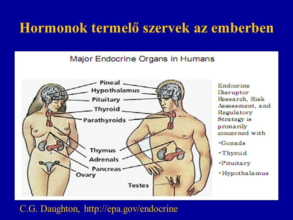 Hormonok termelő szervek az emberben C.G. Daughton, http://epa.gov/endocrine