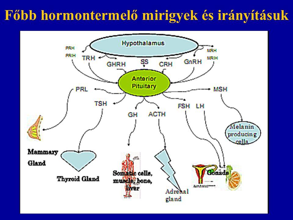 Főbb hormontermelő mirigyek és irányításuk