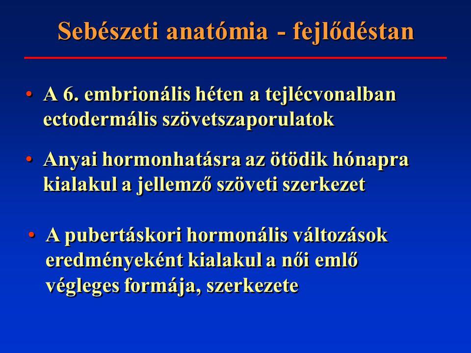 Sebészeti anatómia - felépítés A mirigyállomány a m.