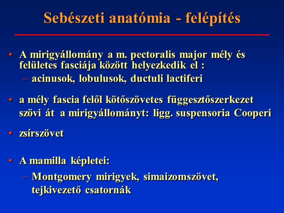 Sebészeti anatómia - vérellátás Artériás: –a.thoracica interna (a.