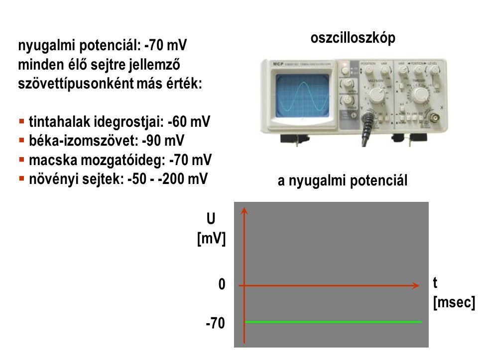oszcilloszkóp a nyugalmi potenciál -70 0 U [mV] t [msec] nyugalmi potenciál: -70 mV minden élő sejtre jellemző szövettípusonként más érték:  tintahal