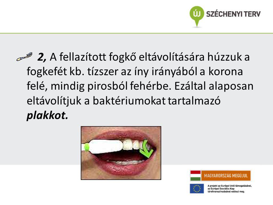 2, A fellazított fogkő eltávolítására húzzuk a fogkefét kb. tízszer az íny irányából a korona felé, mindig pirosból fehérbe. Ezáltal alaposan eltávolí