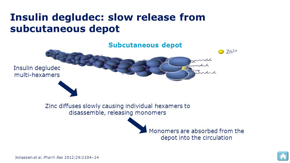 Insulin degludec: slow release from subcutaneous depot Insulin degludec multi-hexamers Zinc diffuses slowly causing individual hexamers to disassemble