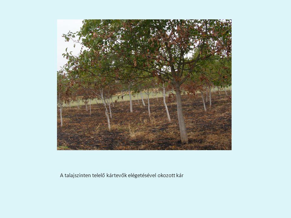 A talajszinten telelő kártevők elégetésével okozott kár