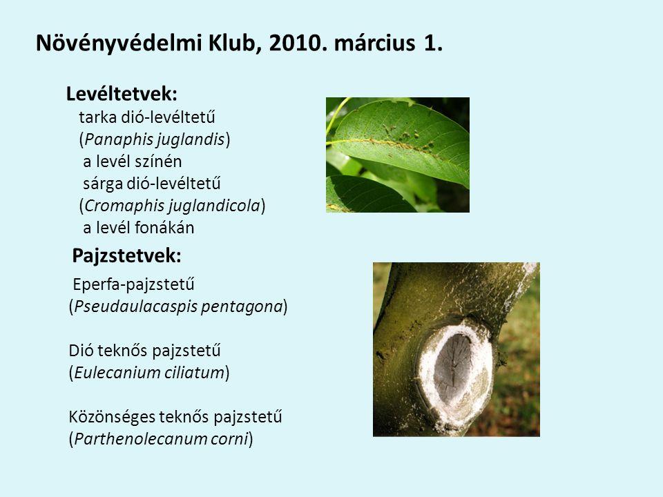 Levéltetvek: tarka dió-levéltetű (Panaphis juglandis) a levél színén sárga dió-levéltetű (Cromaphis juglandicola) a levél fonákán Növényvédelmi Klub, 2010.