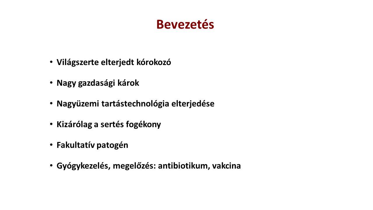 A kórokozó: Actinobacillus pleuropneumoniae Pasteurellaceae család Gram-negatív, coccoid, rövid pálcika alakú, igényes, fakultatív anaerob baktérium 2 biotípus: 1-es NAD-dependens (1-12 és 15) 2-es NAD-independens (13,14) 15 szerotípus felületi antigének alapján