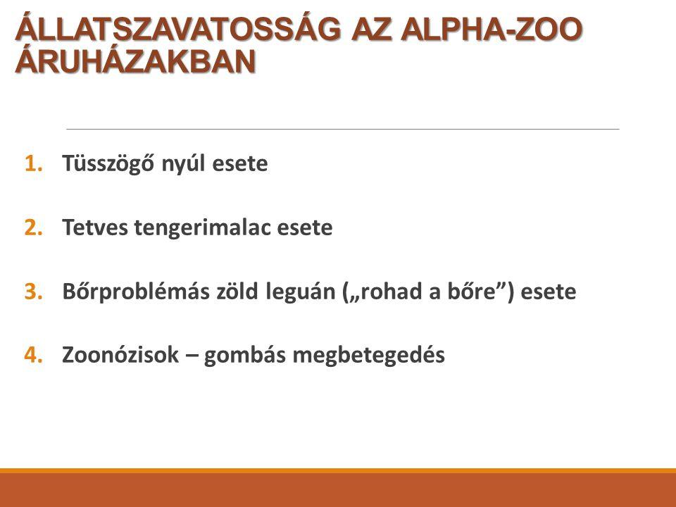 """ÁLLATSZAVATOSSÁG AZ ALPHA-ZOO ÁRUHÁZAKBAN 1.Tüsszögő nyúl esete 2.Tetves tengerimalac esete 3.Bőrproblémás zöld leguán (""""rohad a bőre ) esete 4.Zoonózisok – gombás megbetegedés"""