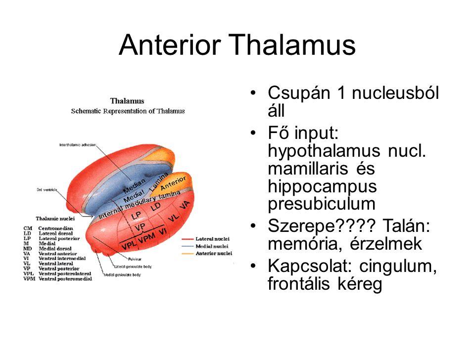 Mediális Thalamus Főként dorsomedialis Három alosztálya van, mindhárom a frontális kéreggel áll kapcsolatban Input: BG, amygdala, középagy Szerep: memória