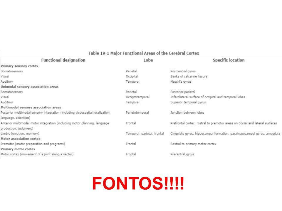 Fő asszociációs areák Posterior –Parietális, occipitális, temporális infó – percepció, nyelv Limbikus –Emóció, memória storage Anterior (PFCTX) –(mozgás)tervezés
