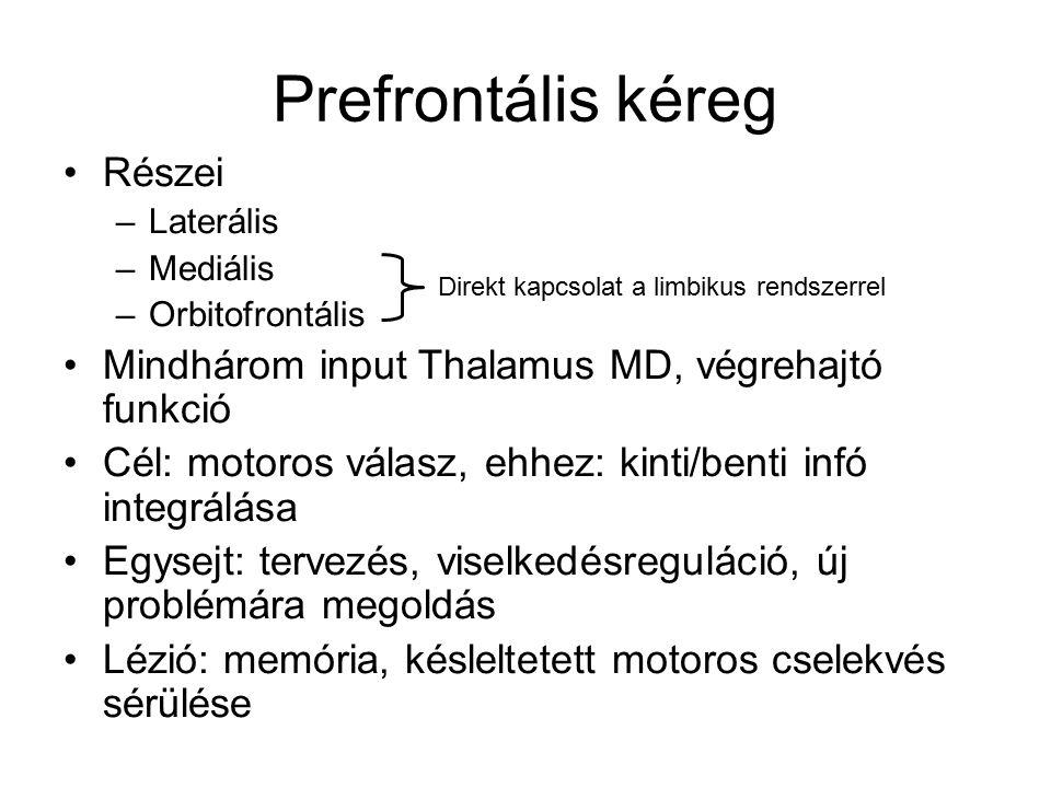 A dorzális prefrontális kéreg 3 rész 1.Sulcus körüli 2.Ettől ventrálisan 3.Ettől dorzálisan 1971: Foster és Alexander – sulcus körüli területek: már nagyon spéci esetekre válasz Ventrális: WHAT Dorzális: WHERE
