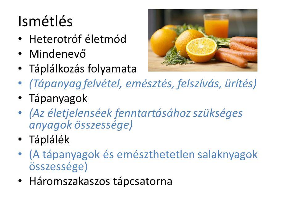 Ismétlés Heterotróf életmód Mindenevő Táplálkozás folyamata (Tápanyag felvétel, emésztés, felszívás, ürítés) Tápanyagok (Az életjelenséek fenntartásáh