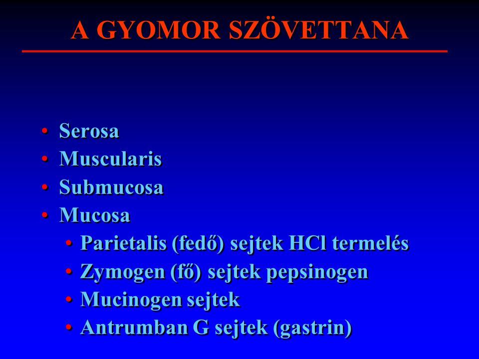 A GYOMOR SZÖVETTANA Serosa Muscularis Submucosa Mucosa Parietalis (fedő) sejtek HCl termelés Zymogen (fő) sejtek pepsinogen Mucinogen sejtek Antrumban