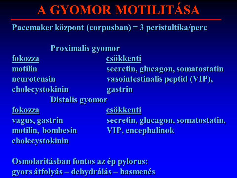 A GYOMOR MOTILITÁSA Pacemaker központ (corpusban) = 3 peristaltika/perc Proximalis gyomor fokozza csökkenti motilin secretin, glucagon, somatostatin n