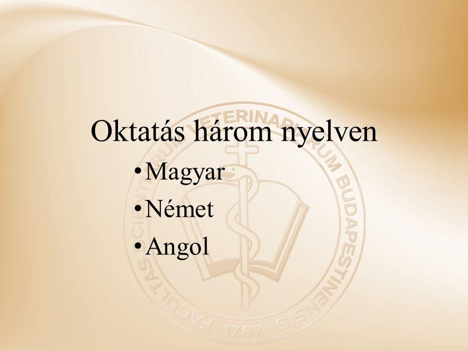 Oktatás három nyelven Magyar Német Angol