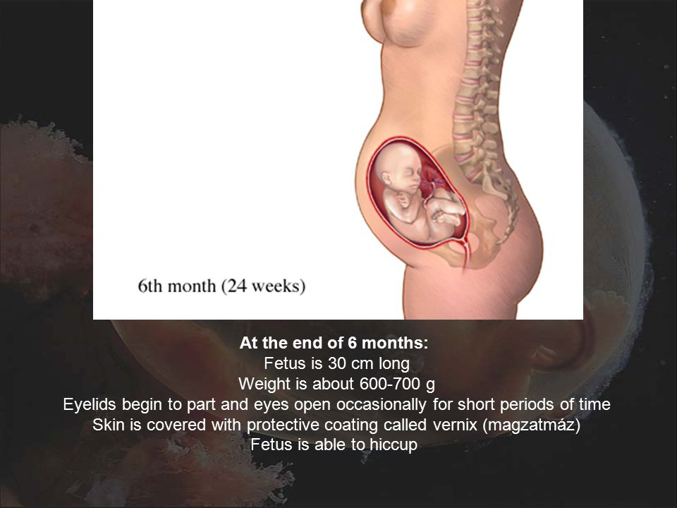 At the end of 6 months: Fetus is 30 cm long Weight is about 600-700 g Eyelids begin to part and eyes open occasionally for short periods of time Skin