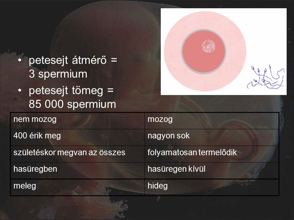 petesejt átmérő = 3 spermium petesejt tömeg = 85 000 spermium nem mozogmozog 400 érik megnagyon sok születéskor megvan az összesfolyamatosan termelődik hasüregbenhasüregen kívül meleghideg