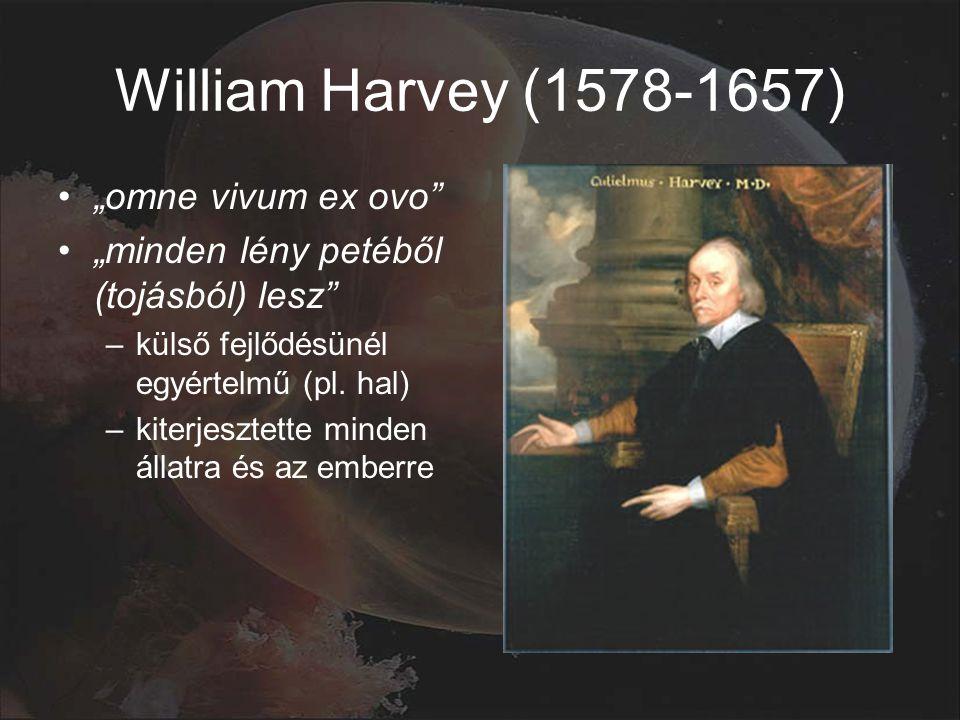 """William Harvey (1578-1657) """"omne vivum ex ovo """"minden lény petéből (tojásból) lesz –külső fejlődésünél egyértelmű (pl."""