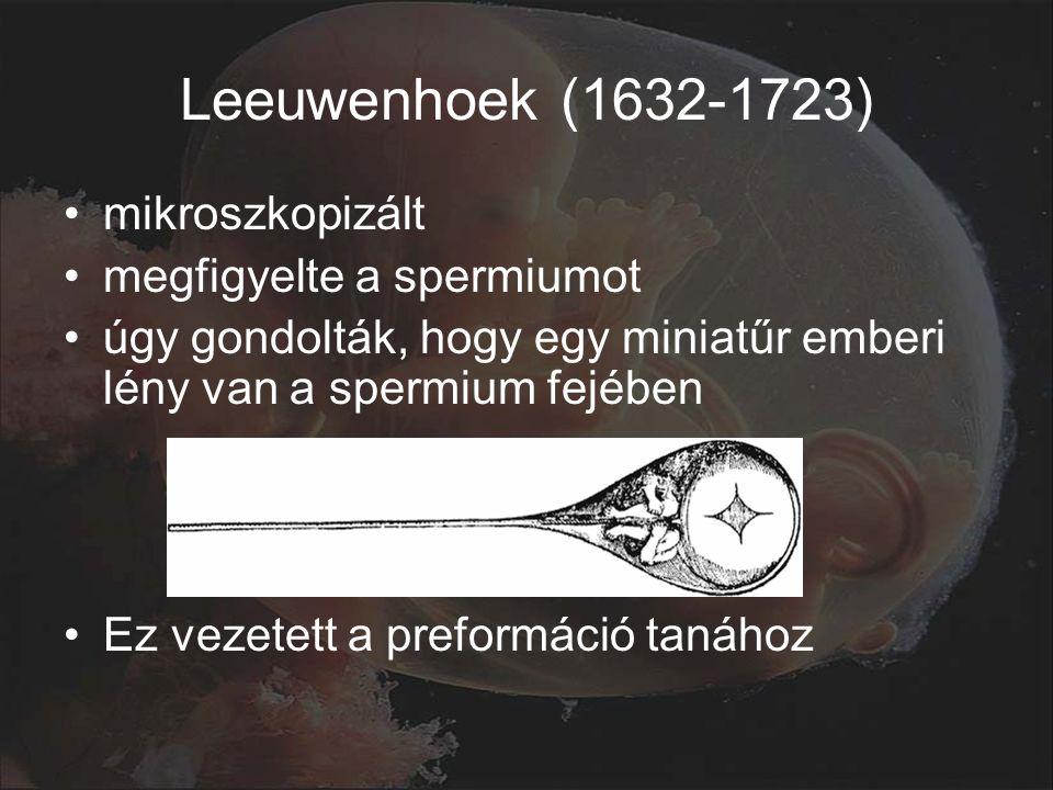 Leeuwenhoek (1632-1723) mikroszkopizált megfigyelte a spermiumot úgy gondolták, hogy egy miniatűr emberi lény van a spermium fejében Ez vezetett a preformáció tanához