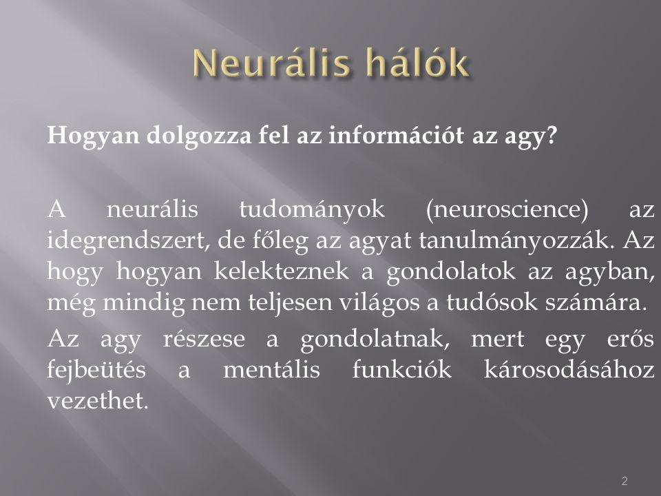 Hogyan dolgozza fel az információt az agy? A neurális tudományok (neuroscience) az idegrendszert, de főleg az agyat tanulmányozzák. Az hogy hogyan kel