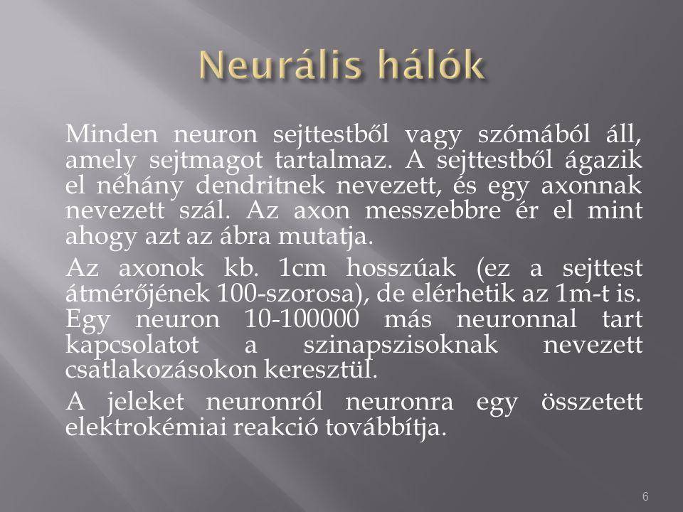 Minden neuron sejttestből vagy szómából áll, amely sejtmagot tartalmaz. A sejttestből ágazik el néhány dendritnek nevezett, és egy axonnak nevezett sz