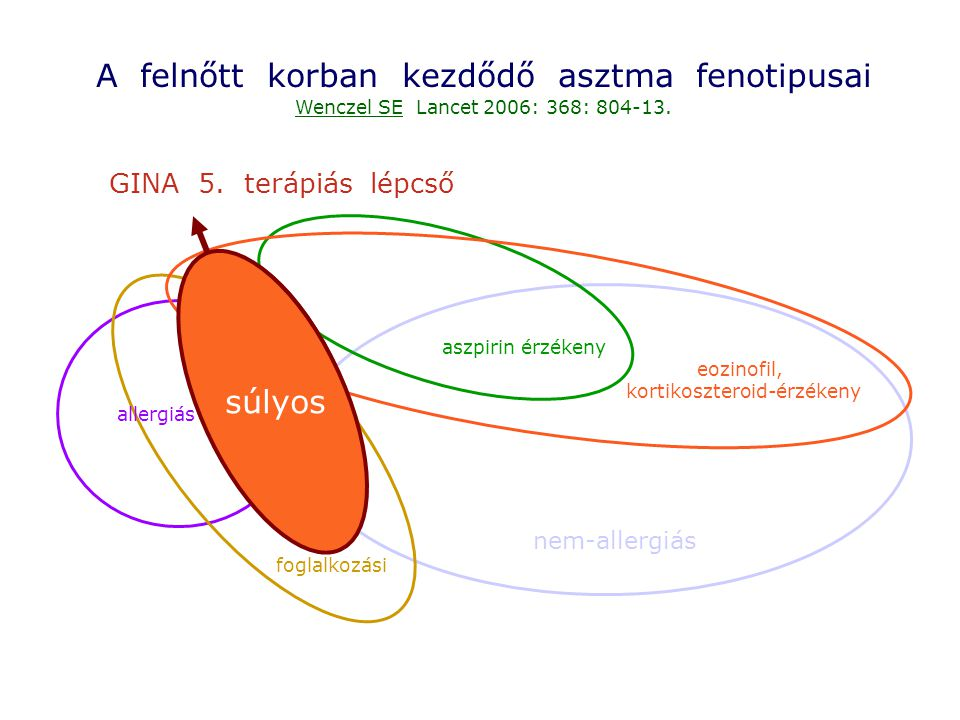 Gyulladásos sejtek mastocyta eosinophil Th2 basophil neutrophil vérlemezke Strukturális sejtek Epithel Simaizom Endothel Fibroblast Ideg Mediátorok Histamin Leukotrienek Prostanoidok PAF Kininek Adenosin Endothelinek NO Cytokinek Chemokinek Növekedési faktorok Hatások Hörgőgörcs Exsudatio Nyákszekréció Légúti hiperreaktivitás Szerkezeti átépülés