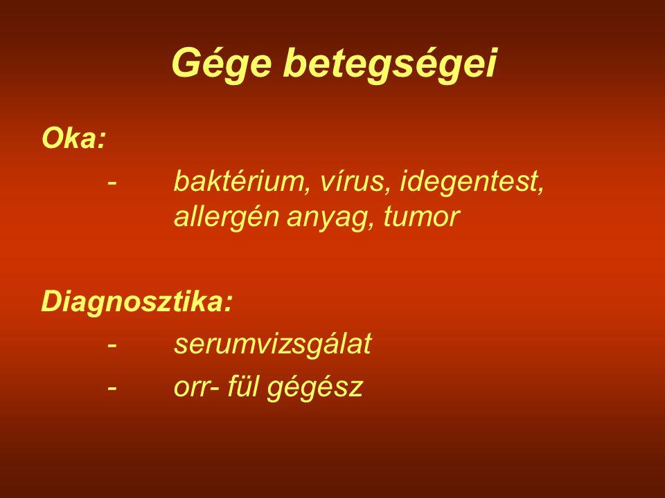 Gége betegségei Oka: -baktérium, vírus, idegentest, allergén anyag, tumor Diagnosztika: -serumvizsgálat -orr- fül gégész